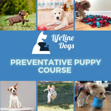 Preventative Puppy
