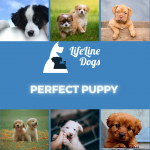Complete Puppy Training Course