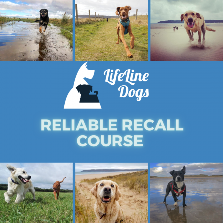 Online Recall Course