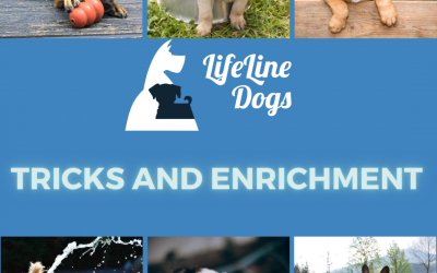 Introduction to tricks and enrichment