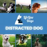 Distracted Dog