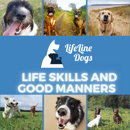 Life Skills and Good Manners