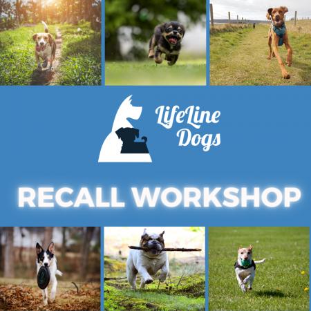 Recall Workshop